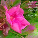 Pink Rose Delight by sarnia2