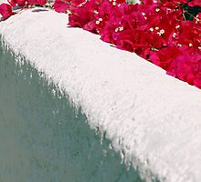 Flower topped adobe wall. by Tigersoul
