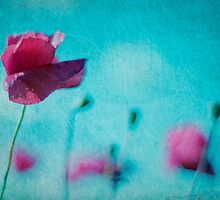 ~poppies in the wind by TeresaMurphy