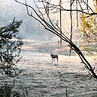 Horse on Frosty Ground by Virginiad