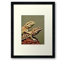 Basking Dragons  Framed Print