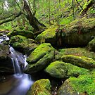 """Mossy Creek"" by Husky"