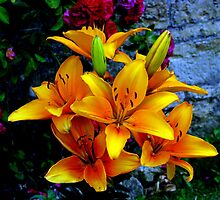 Daylilies by Elizabeth Kendall