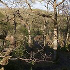 Trees of another Relm in wild Wales by leunig