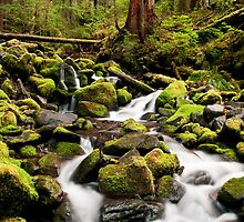 Forest Stream by Sam Scholes