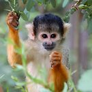Flower Monkey Free by ApeArt