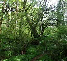 Hoh Rainforest, Olympic National Park, WA by chrispy