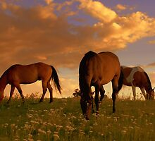 Splendor Of A Summer Evening  by Jeanne  Nations