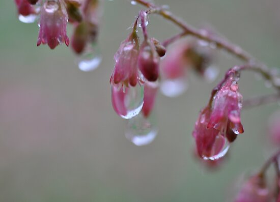 The Water Drops by Corkle