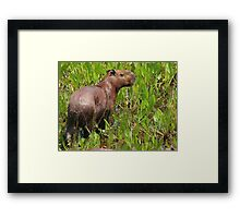 Wet capybara Framed Print