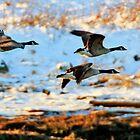 Goose Trio by Debbie  Roberts