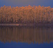 'gumtrees reflection in lake', Pemberton, WA by BigAndRed