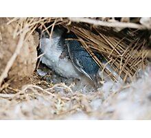 """Little Penguin in nest - Shelley Beach"" Photographic Print"