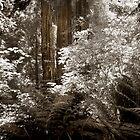 Dark  Wood by Neil Messenger