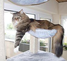 relaxing Jimmy by Ferdi S.