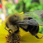 ~ Bee Happy ~ by Brenda Boisvert