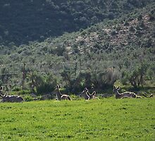 Mule Deer Silhouettes in Sunshine by © Betty E Duncan ~ Blue Mountain Blessings Photography