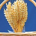 Dried wheat in wicker basket by Mark  Humphreys