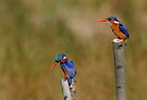 Two Kings by Macky