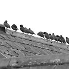 Birds on Rooftop  by Dannyshack
