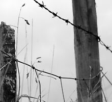 Barbed Wire Fench by Dannyshack