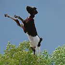Freedom...Jumping Over The Trees by MaeBelle