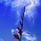 My Gladiolus by christopher r peters