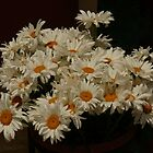 White daisies in a brown pot  by krista121