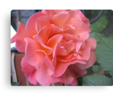 West Side Story Rose - Little Maria Metal Print
