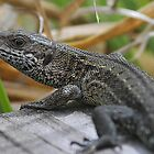 common lizard: and on the boardwalk there maybe dragons by Grandalf