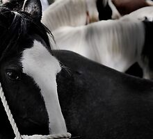 Wild Horses 5 by Hushabye Lifestyles