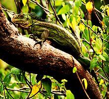 iguana  by S .