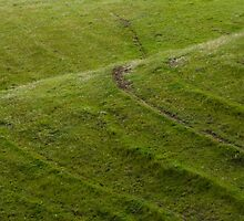 Sheep Tracks on the Green Hills by trevallyphotos