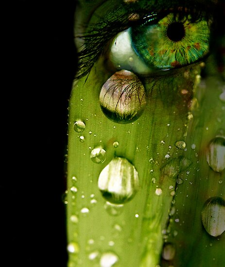Dew You Cry? by eleveneleven