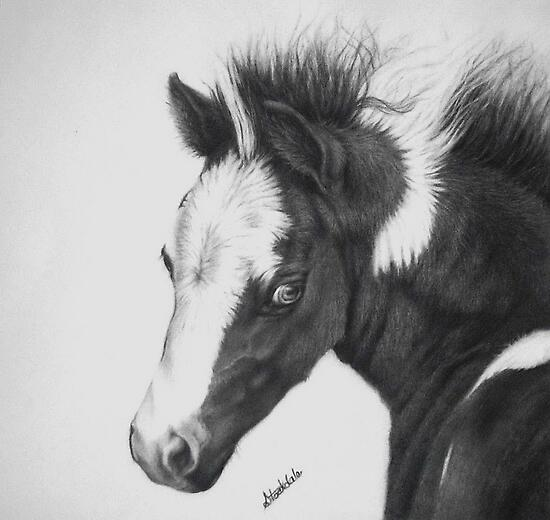Blue Eyed Paint Foal by Margaret Stockdale