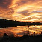 Sunset on Bodega Bay Harbor by Cupertino