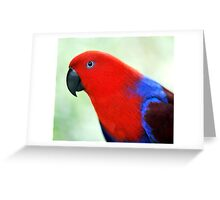 Simply Red - Eclectus parrot Greeting Card