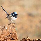Blue Wren by Jodi Turner