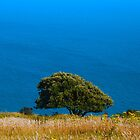 tree in a field, sea in the background, Southdowns, England by zuzanab