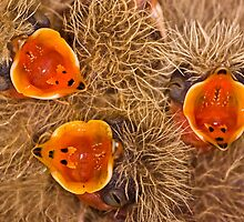 Skylark ( Alauda arvensis ) chicks by Gabor Pozsgai