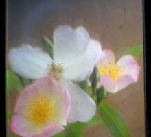 TTV Rose by missmoneypenny