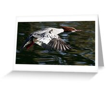 Flight Of The Goosander Greeting Card