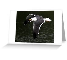 The Great Black Backed Gull Greeting Card