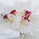 Peony with Ants by Christine Wilson