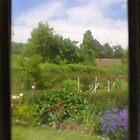 Remembering summer in my garden by missmoneypenny