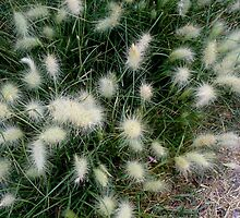 Wild Grass Seeding by Ann Warrenton