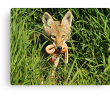 Mouth Full of Snake Canvas Print