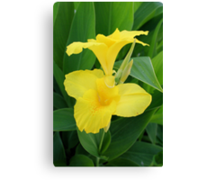 Closeup Of A Tropical Yellow Canna Lily Canvas Print