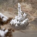 Yellowstone Frozen Tree at Mammoth by Forrest J. Wolfe