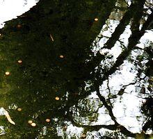 relection of bridge,Japanese tea garden by califpoppy1621
